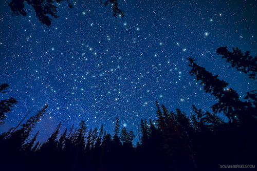 starry sky, looking through evergreen sillhouette