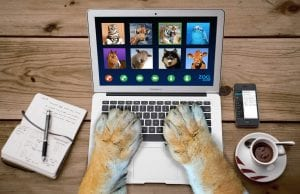 Video call of animals on a laptop, with lion paws on the keyboard
